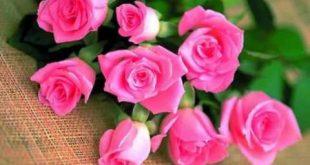 بالصور ورد طبيعي , الورود الطبيعية 4738 10 310x165