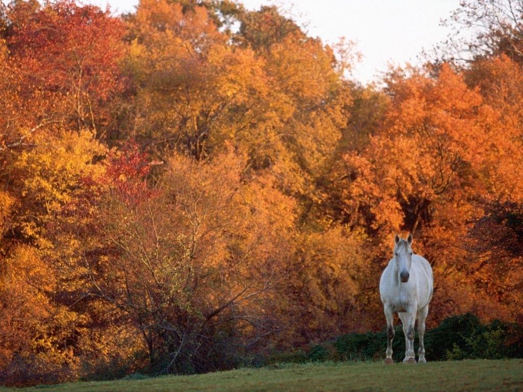 بالصور حصان عربي , صور احصنة عربيه 5795 10