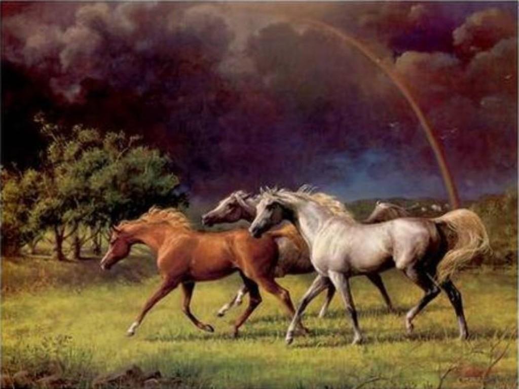 بالصور حصان عربي , صور احصنة عربيه 5795 8