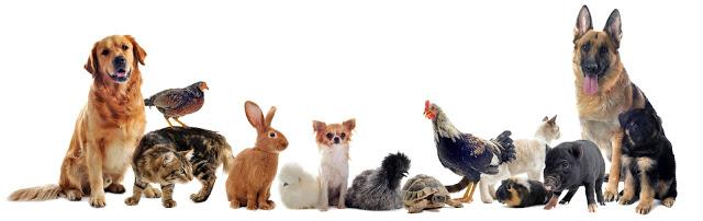 صور حيوانات اليفة , صور حيوانات اليفه