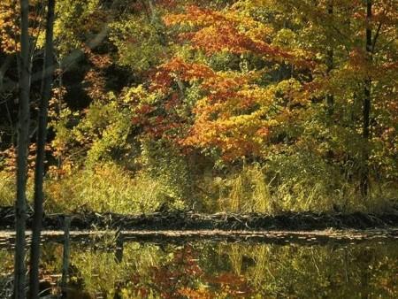 بالصور رسم منظر طبيعي , صور مناظر طبيعيه 5818 4