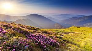 بالصور صور جمال الطبيعة , صور للغابات والورود الجميله 3703 2