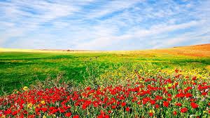 بالصور صور جمال الطبيعة , صور للغابات والورود الجميله 3703 3