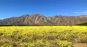 بالصور صور جمال الطبيعة , صور للغابات والورود الجميله 3703 4