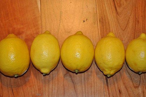 صور زهر الليمون , فوائد زهرة الليمون