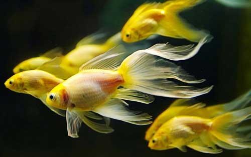 صورة معلومات عن الاسماك , ماذا تعرف عن الاسماك؟
