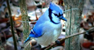 اجمل طيور العالم , اجمل الوان الطيور في العالم