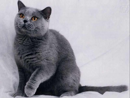 بالصور قطط جميلة , خلفيات قطط روعه 5835 11
