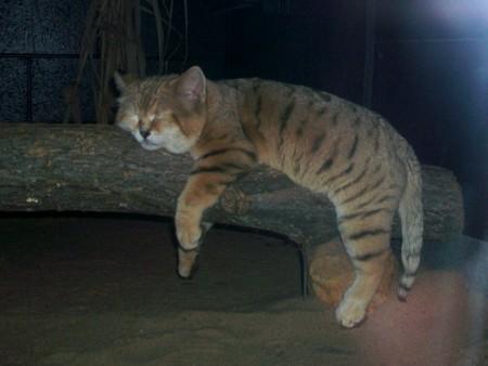 بالصور قطط جميلة , خلفيات قطط روعه 5835 2