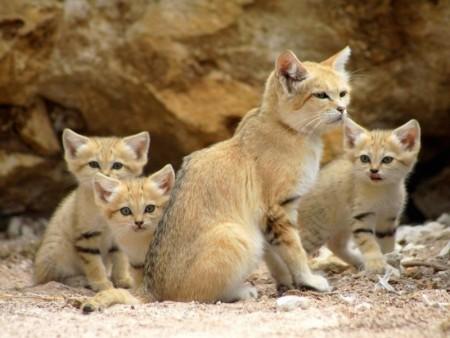 بالصور قطط جميلة , خلفيات قطط روعه 5835 3
