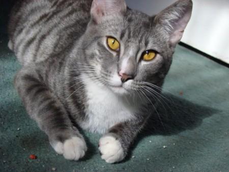 بالصور قطط جميلة , خلفيات قطط روعه 5835 4