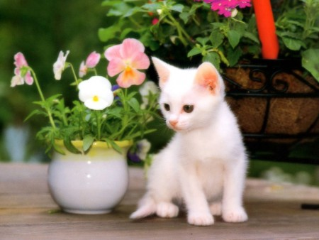 بالصور قطط جميلة , خلفيات قطط روعه 5835 5