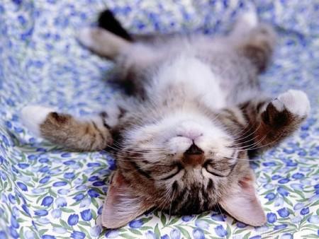 بالصور قطط جميلة , خلفيات قطط روعه 5835 7