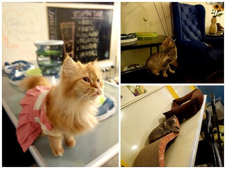 بالصور قطط جميلة , خلفيات قطط روعه 5835 8