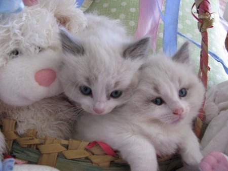 بالصور قطط جميلة , خلفيات قطط روعه 5835 9