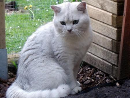 بالصور قطط جميلة , خلفيات قطط روعه 5835