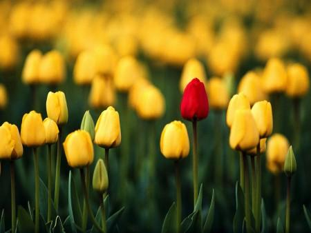 بالصور خلفيات ورد , صور زهور حلوه 5875 1