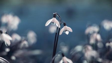 بالصور خلفيات ورد , صور زهور حلوه 5875 10