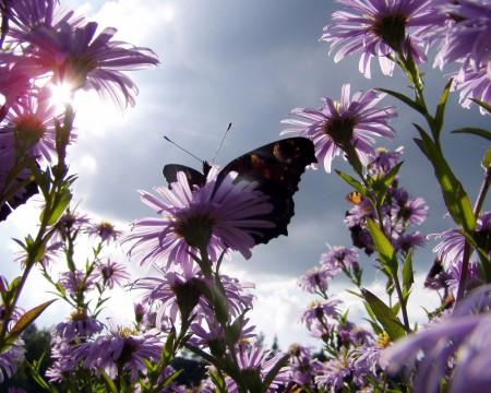 بالصور خلفيات ورد , صور زهور حلوه 5875 4