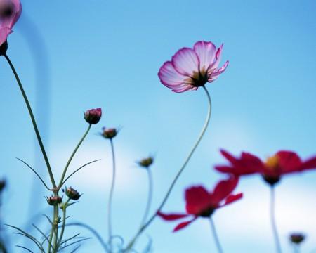 بالصور خلفيات ورد , صور زهور حلوه 5875 7