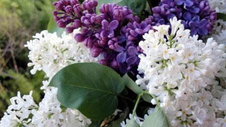 بالصور خلفيات ورد , صور زهور حلوه 5875 8