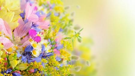 بالصور خلفيات ورد , صور زهور حلوه 5875