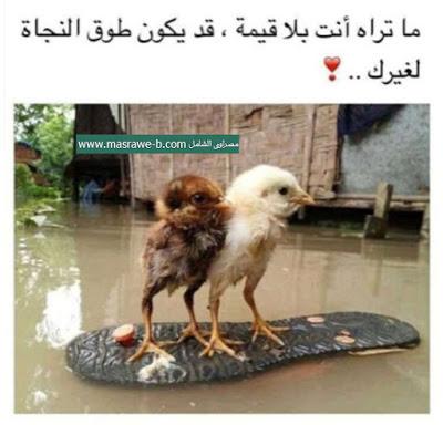 بالصور حاجه حلوه , صور مميزة و حلوه 5922 3