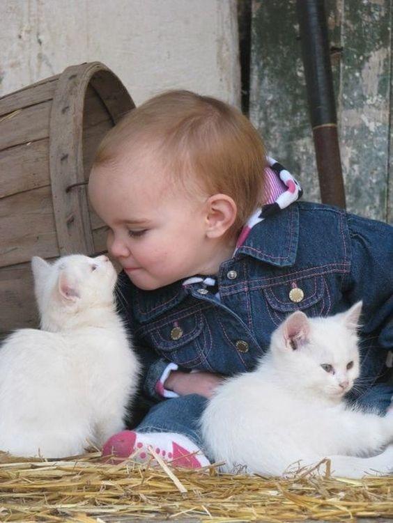 صور قطط رومي , صور قطط جميله اوي