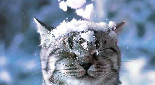 بالصور قطط رومي , صور قطط جميله اوي 6065 2