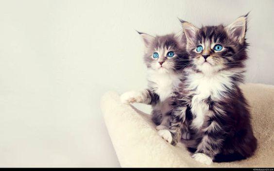 بالصور قطط رومي , صور قطط جميله اوي 6065 3