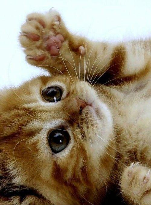 بالصور قطط رومي , صور قطط جميله اوي 6065 5