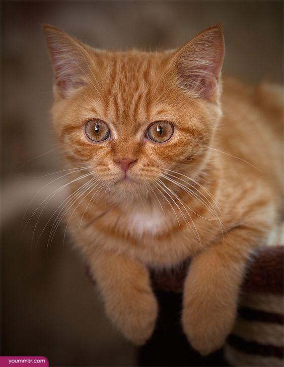 بالصور قطط رومي , صور قطط جميله اوي 6065 7