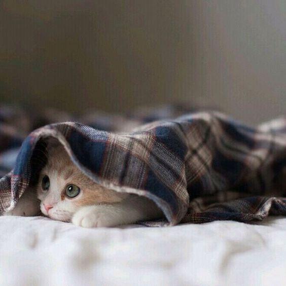 بالصور قطط رومي , صور قطط جميله اوي 6065 9