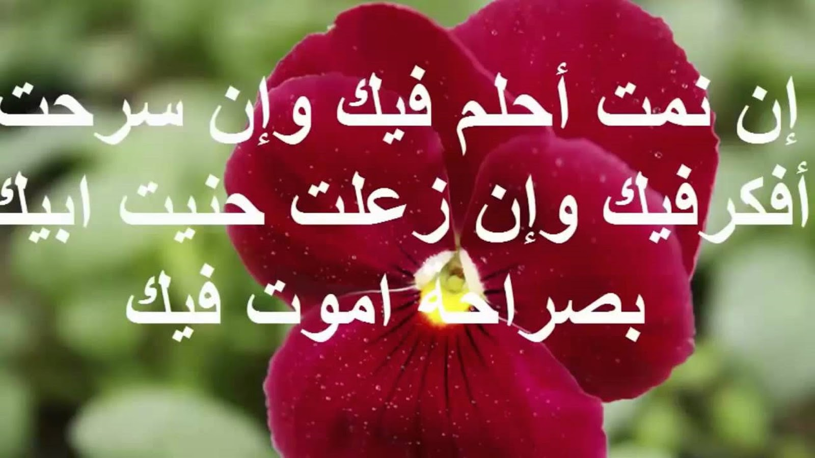 بالصور رسائل حب وعشق , اروع كلمات وعبارات الغرام 6704 10