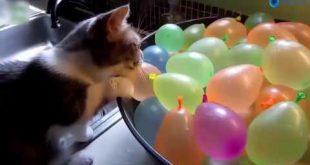 صور قطط مضحكة , مواقف قطط تموت من الضحك