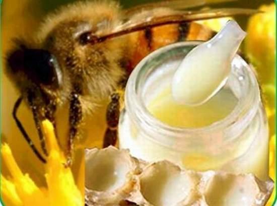 بالصور فوائد غذاء ملكات النحل , اهمية غذاء الملكات 1196 1