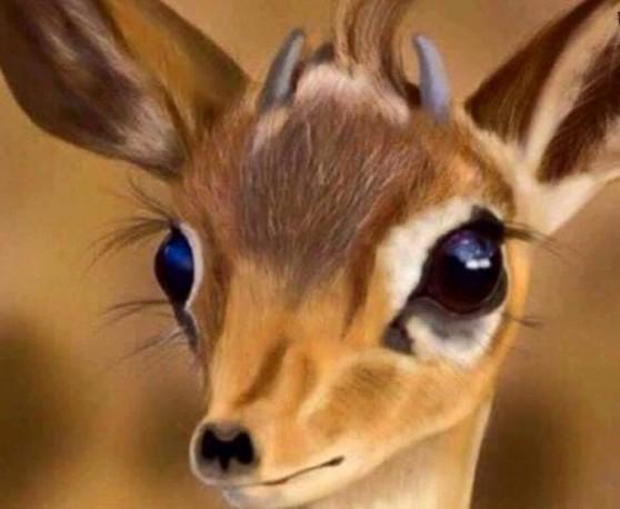 صورة عيون الريم , من اجمل العيون