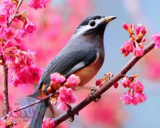 صور صور طيور , اجمل صور طيور