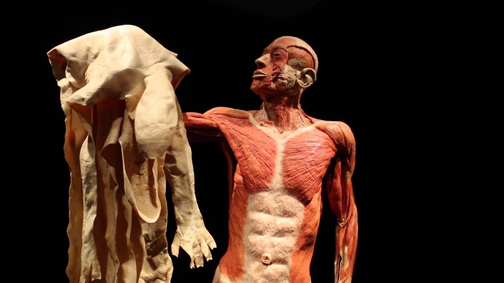 صور هل تعلم عن الانسان , معلومات لا تعرفها عن جسدك
