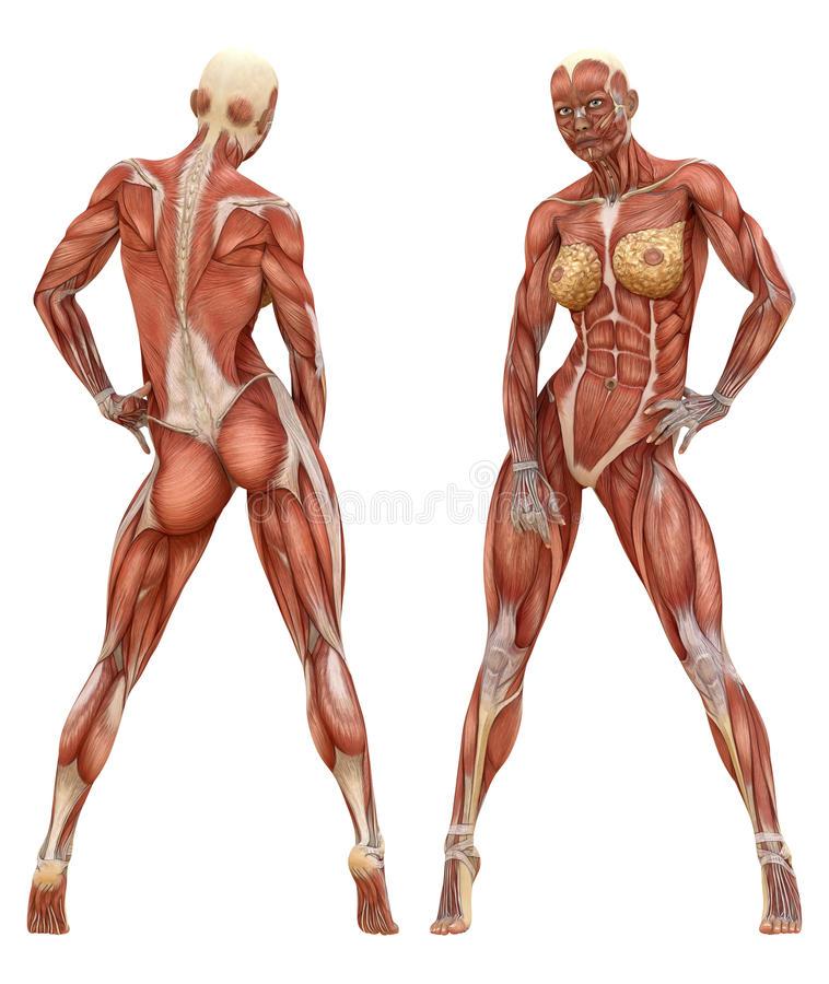صورة كم عدد عضلات جسم الانسان , تعرف علي عدد العضلات في جسدك