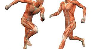 بالصور كم عدد عضلات جسم الانسان , تعرف علي عدد العضلات في جسدك 4157 3 310x165