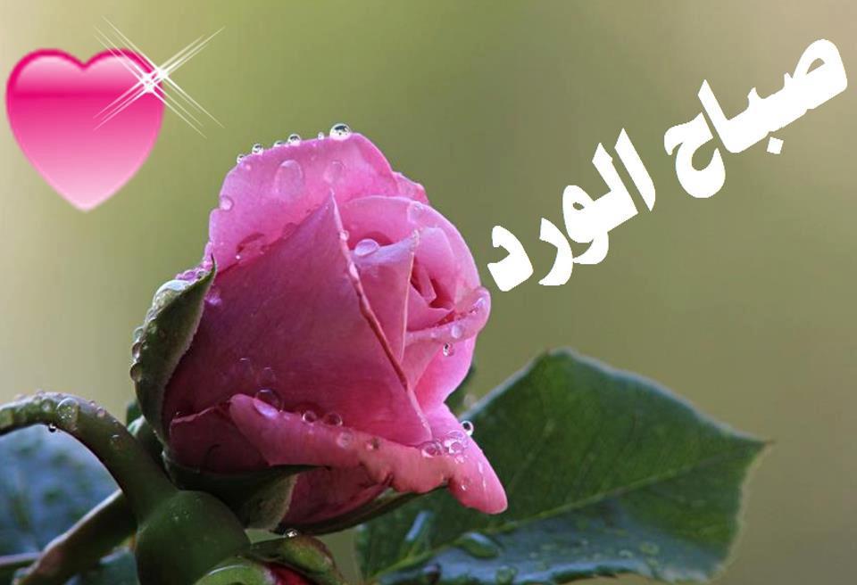 صورة عبارات صباحية للحبيب , حبيبي صباح الخير 4189 25