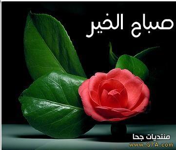 صورة عبارات صباحية للحبيب , حبيبي صباح الخير 4189 29