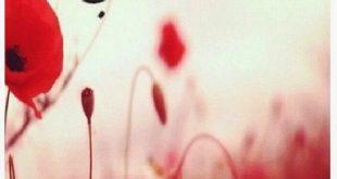 صور مساء الورد حبيبي , اجمل تحيات المساء