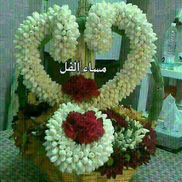 بالصور مساء الفل , ارسل احلي تحية مساء وقول مساء الفل علي الحلوين 5285 4
