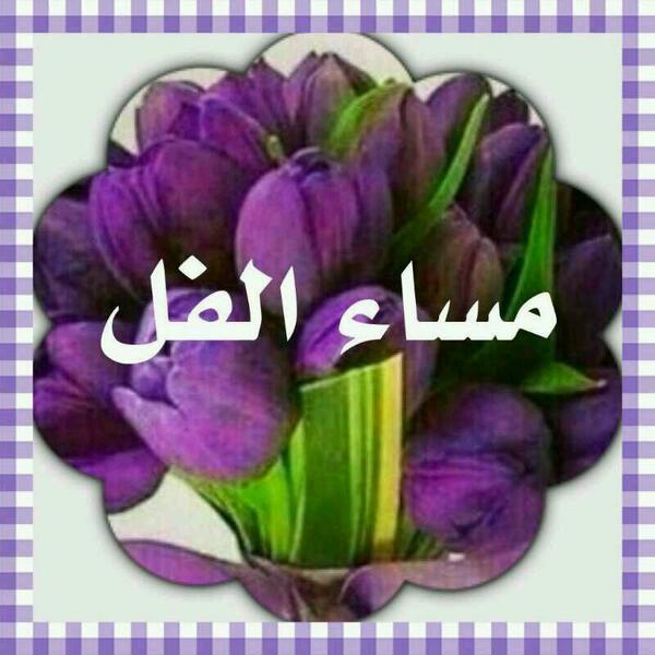 بالصور مساء الفل , ارسل احلي تحية مساء وقول مساء الفل علي الحلوين 5285 6
