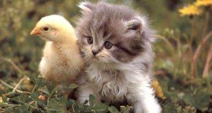 صور اجمل صور قطط , لهواة القطط صور قطط كيوت جدا