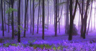 بالصور خلفيات طبيعية ساحرة , مجموعة صور مناظر طبيعية روعة 5516 10 310x165