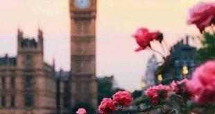 صور صور عن الورد , احلى صور زهور منوعة