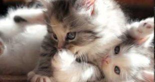 صور صور قطط صغيرة , اجمل صور قطط